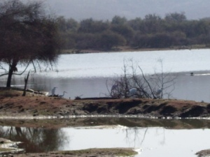 Another small lake in the Sariska Tiger Reserve